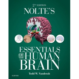 Nolte's Essentials of the Human Brain E-Book (ebook)