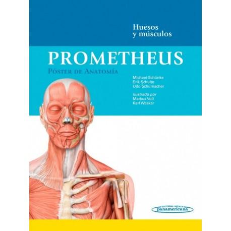 Prometheus. Póster de Anatomía: Huesos y músculos - Envío Gratuito